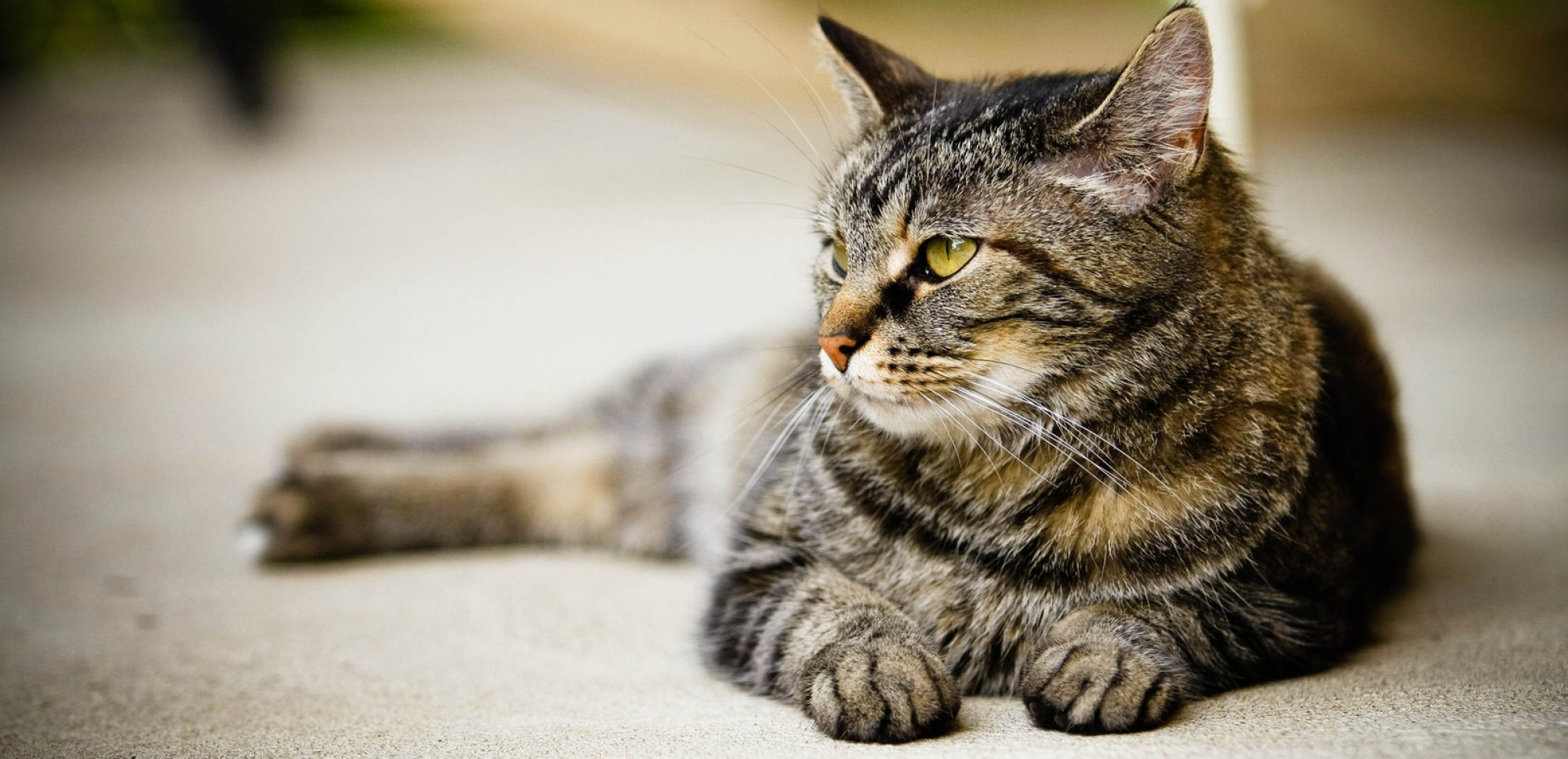 Kastrace kočky a kocoura